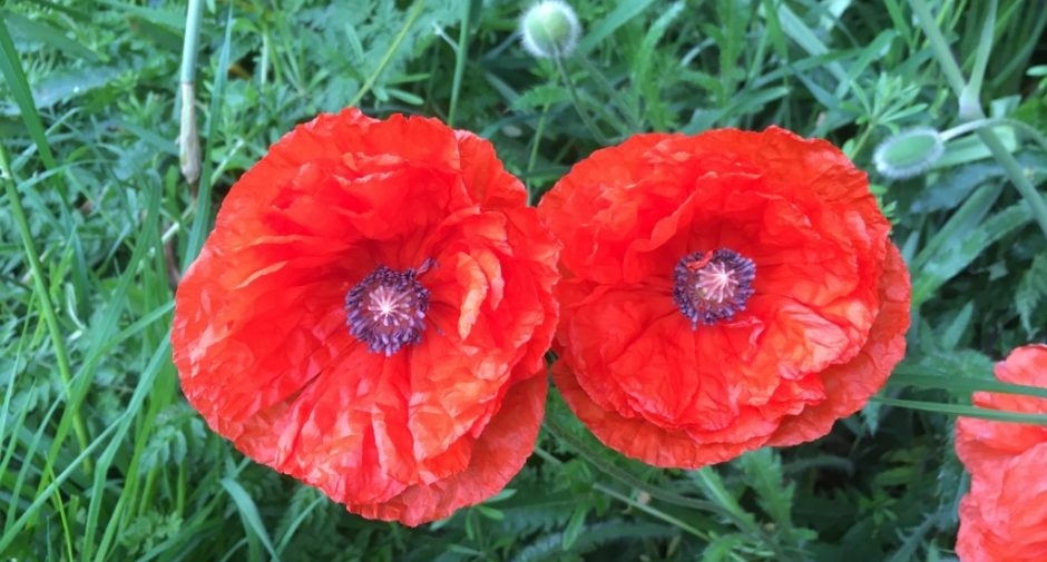Stockport asked to join in Remembrance Sunday from home